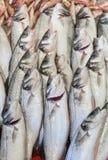 Pesce fresco Fotografie Stock Libere da Diritti