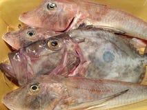 Pesce fresco Fotografia Stock