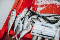 Pesce fresco al mercato Fotografie Stock Libere da Diritti