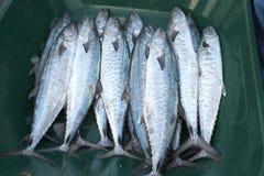 Pesce fresco al mercato ittico del Dubai immagine stock