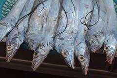 Pesce fresco blu su un mercato di strada a Seoul immagine stock libera da diritti