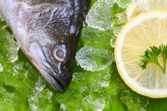 Acquicoltura immagine stock immagine di colore litorale for Cucinare qualcosa di fresco