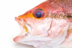 Pesce fresco del dentice Fotografie Stock