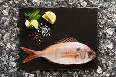 Pesce fresco del dentice su un piatto di pietra nero Fotografie Stock Libere da Diritti