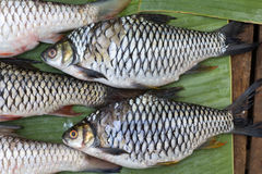 Pesce fresco del Mekong Fotografie Stock