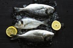 Pesce fresco dell'orata o di dorado con il bordo di legno del ghiaccio e del limone sopra fondo nero fotografie stock
