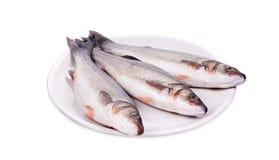 Pesce fresco della spigola tre sul piatto Immagini Stock