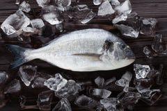 Pesce fresco di dorado su ghiaccio Fotografia Stock