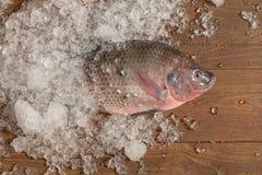 Pesce fresco di Nilotica del pesce del mango di tilapia di Nilo su ghiaccio e sulle sedere di legno Immagine Stock Libera da Diritti