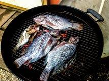 Pesce fresco di tilapia sulla griglia Fotografie Stock