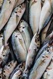 Pesce fresco, fine su Fotografie Stock Libere da Diritti