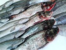 Pesce fresco nel mercato di prodotti freschi o pesce raffreddato supermercato fresco illustrazione vettoriale