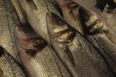 Pesce fresco per le ricette dei piatti per da cucinare o friggere Fotografia Stock Libera da Diritti
