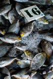 Pesce fresco su ghiaccio immagine stock