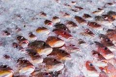 Pesce fresco su ghiaccio Immagine Stock Libera da Diritti