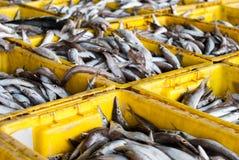 Pesce fresco su ghiaccio al mercato dei frutti di mare Fotografia Stock Libera da Diritti
