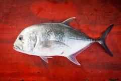 Pesce fresco sul pavimento di legno rosso Immagini Stock Libere da Diritti