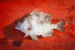 Pesce fresco sul pavimento di legno rosso Immagine Stock