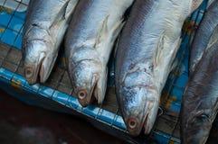 Pesce fresco sulla griglia Immagini Stock Libere da Diritti