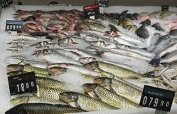 Pesce fresco visualizzato al mercato fotografie stock libere da diritti