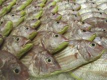 Pesce fresco visualizzato al mercato immagine stock