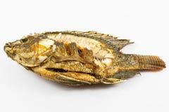 Pesce fritto Fotografie Stock Libere da Diritti