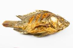 Pesce fritto Immagine Stock