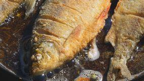 Pesce fritto in olio in pentola stock footage