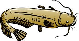 Pesce gatto Fotografia Stock