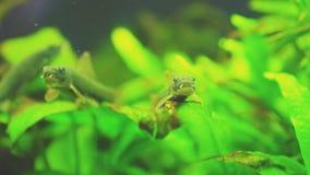 Pesce gatto stock footage