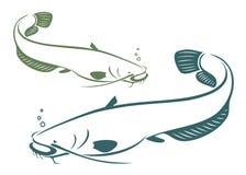Pesce gatto Fotografie Stock Libere da Diritti
