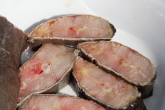 Pesce gatto del pesce fresco Immagine Stock Libera da Diritti