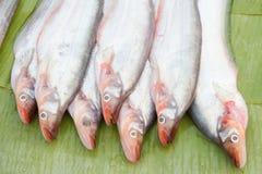 Pesce gatto dentro il mercato di mattina Immagine Stock