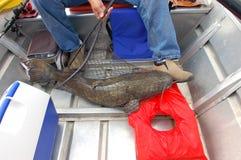 Pesce gatto di Shovelhead immagine stock
