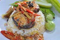 Pesce gatto fritto scalpore piccanti su riso Immagine Stock Libera da Diritti