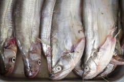 Pesce gatto in vassoio Immagine Stock Libera da Diritti