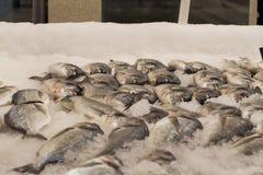 Pesce ghiacciato in deposito Fotografie Stock