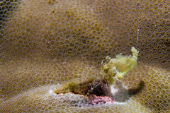Pesce giallo della rana del bambino Immagine Stock