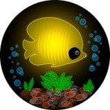 Pesce giallo trasparente Fotografia Stock