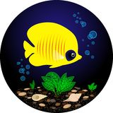 Pesce giallo tropicale Immagini Stock Libere da Diritti