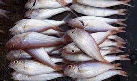 Pesce impilato al mercato ittico di pietra della città Fotografie Stock Libere da Diritti