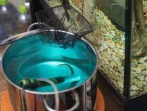 Pesce infettato che prende farmaco immagini stock