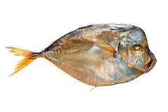 Pesce luna dell'aringa affumicata isolato su bianco Immagine Stock Libera da Diritti