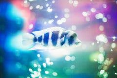 Pesce magico Immagini Stock
