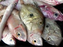 Pesce Mediterraneo per lo stufato Immagine Stock
