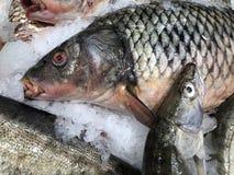 Pesce meravigliosamente posto Pesci freschi fotografia stock libera da diritti