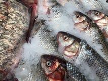 Pesce meravigliosamente posto Pesci freschi fotografia stock