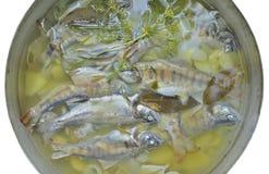 Pesce-minestra fresca 18 Fotografia Stock