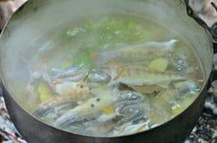 Pesce-minestra fresca 1 Fotografia Stock Libera da Diritti
