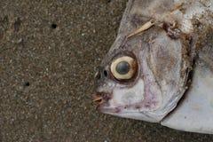 Pesce morto Immagini Stock